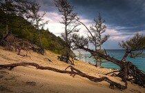 Бухта песчаная. Ходульные деревья.