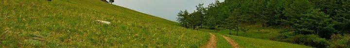 idiba_top