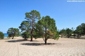 Лес и песок. Нюрганская Губа